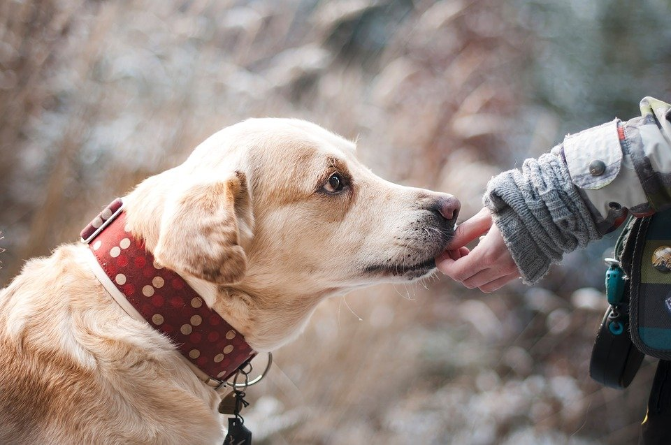 Dog, Friendship, Nature, Trust, Labrador, Snout