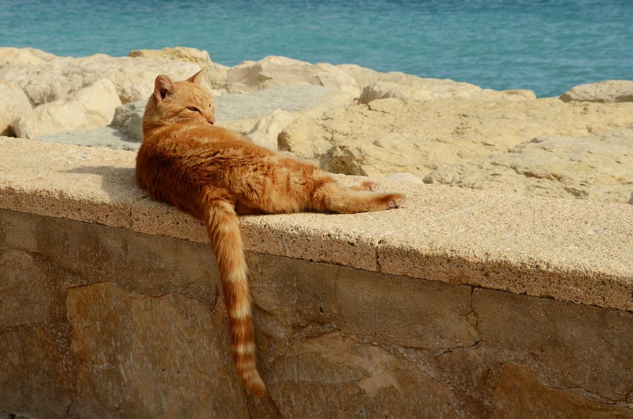 кошка отдыхает картинки прикольные конкурсе