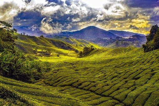 Malaysia Tropics Mountains Sky Clouds Fiel