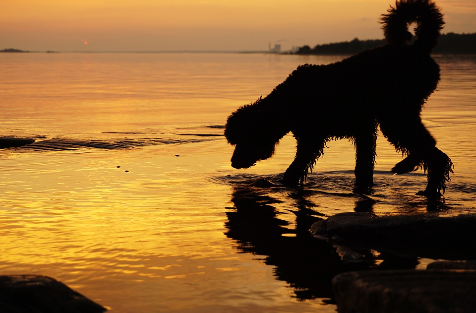Sunset, Dog, Water, Lake, Summer, Twilight, Stones