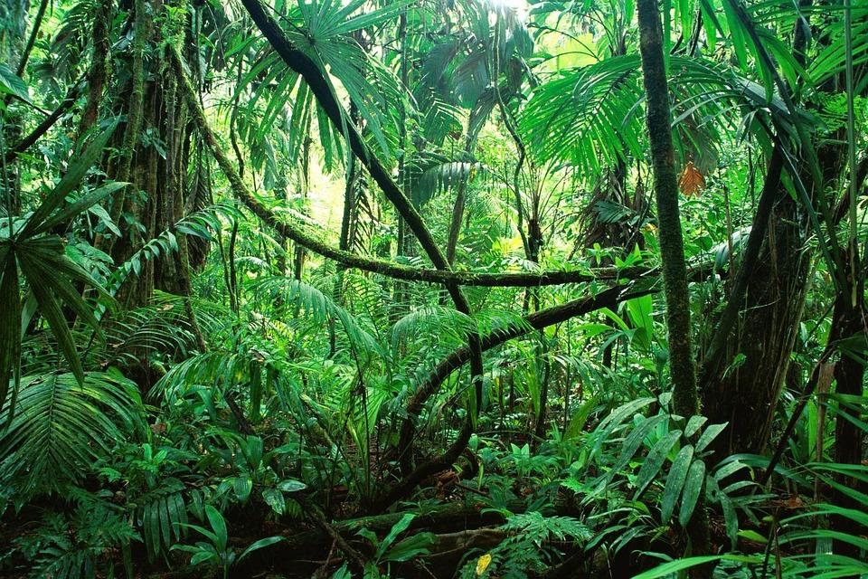 は, ジャングル, の, チアパス州