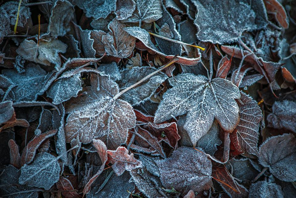 """Image result for leaves in frost"""""""