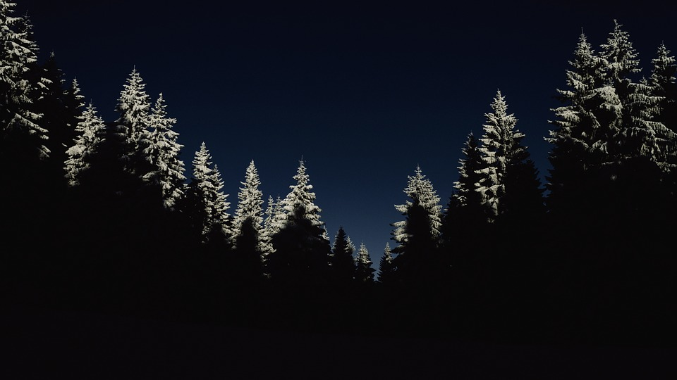 Cold Dark Forest - Free photo on Pixabay