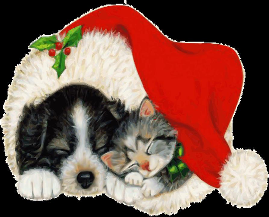 Dog Cat Pet · Free image on Pixabay