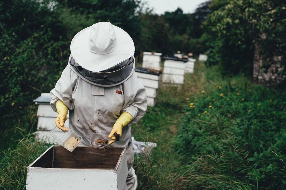 Apiario, Ape, Bee Farm, Alveare, Cera D'Api, Giardino