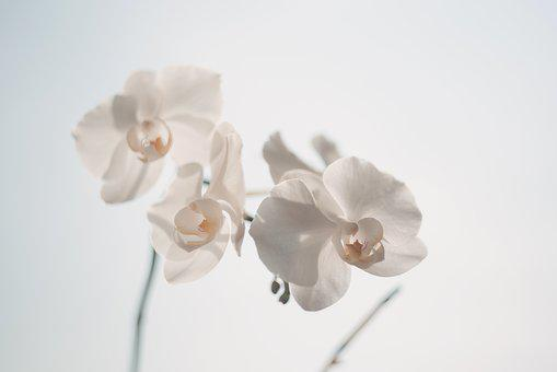 Orchid flower images pixabay download free pictures beautiful orchids white bloom mightylinksfo