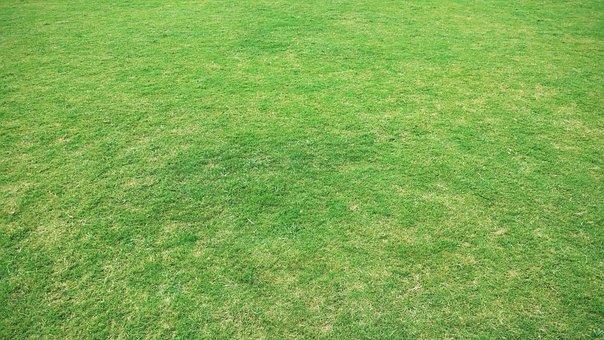 grass background. background backgrounds grass u