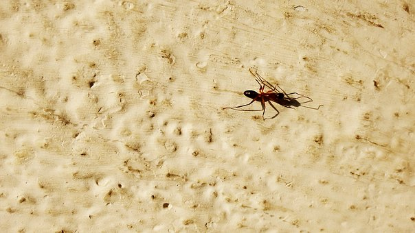 Ant, Hd Background, Sun, Wallpaper