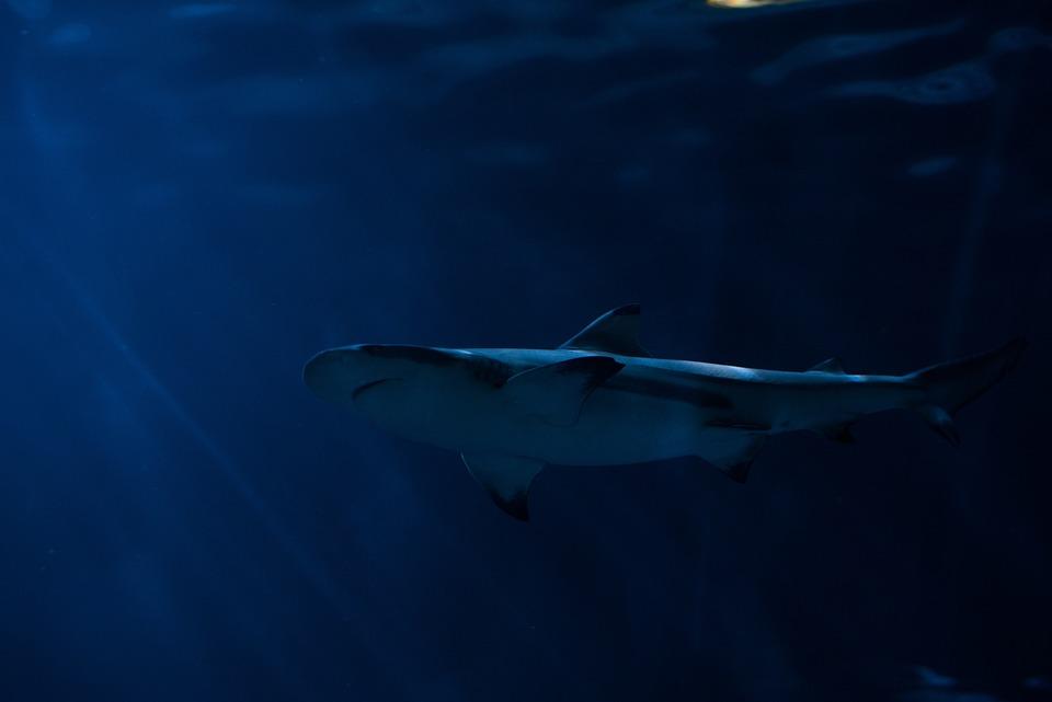 動物、青い水、危険、深い、魚、海洋生物