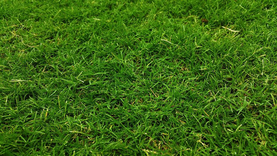Free Photo Dark Green Golf Green Grass Free Image On