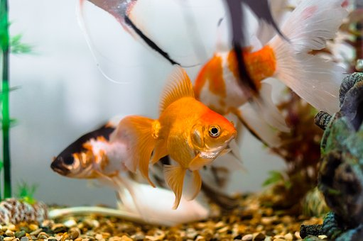 Aquariums Color Dancer Fish Dancers Decora