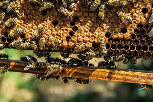 Apiary, Bee, Beehive, Beekeeping