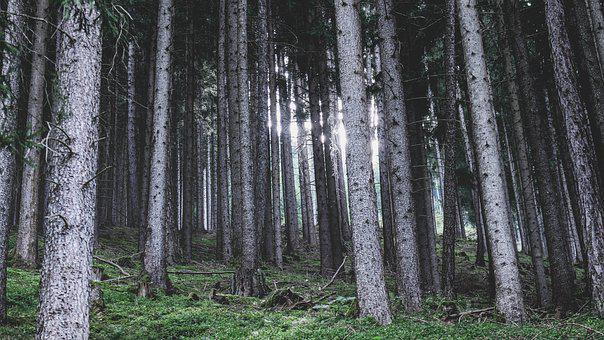 Forest, Landscape, Nature, Outdoors