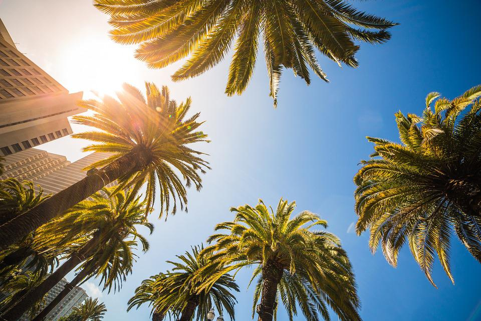 Langit Biru Bangunan Pohon Kelapa Foto Gratis Di Pixabay