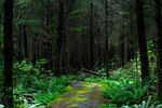eerie, environment, fern