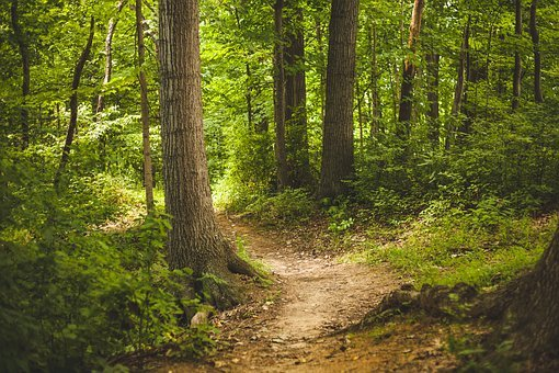 Forest, Trees, Woods, Nature, Outdoors