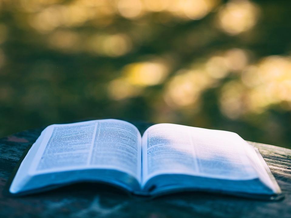 本, ページ, 開いた本, 読み取り, 読書, 知識, 教育, レジャー, 趣味, 本の虫, 章, 文学