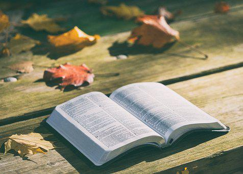 Bench Bible Book Dry Leaves Knowledge Page