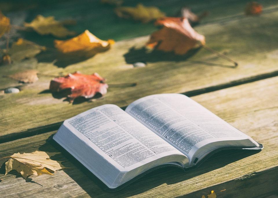 聖書, 本, 知識, ページ, 読書, オープン