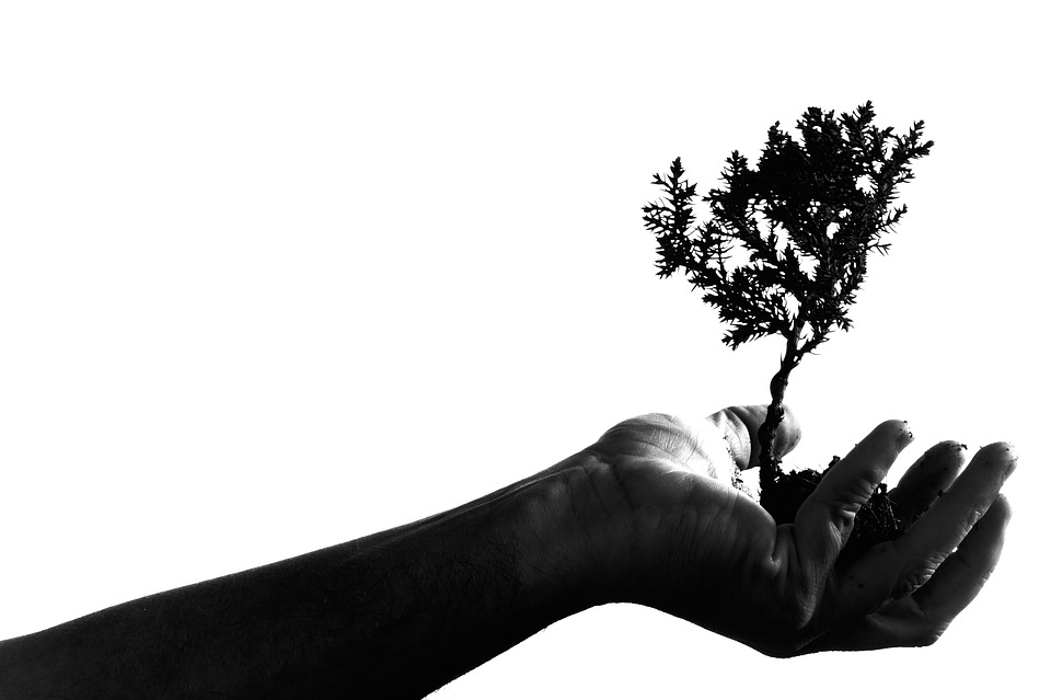 Adult, Art, Bonsai, Hand, Plant, Portrait, Shadow