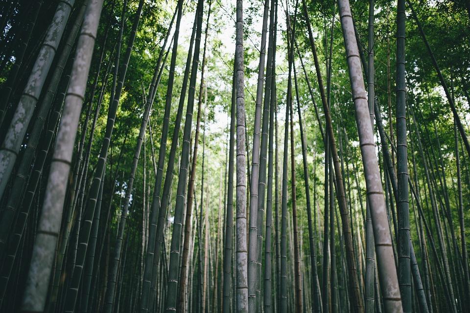 Bambus Zweig Tageslicht Kostenloses Foto Auf Pixabay