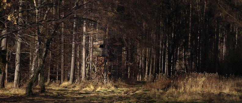 森林, 自然, 户外, 全景, 风景, 景区, 树屋, 树, 伍兹