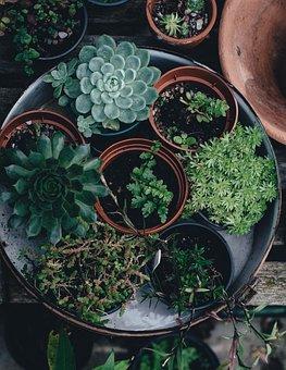 Flora Flower Pots Plants Succulent Succule