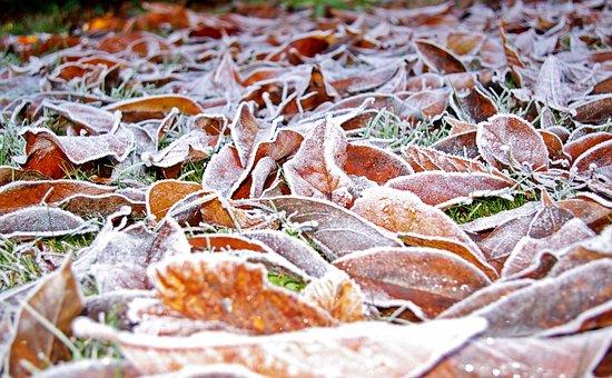 Rush, Lawn Frosty, Meadow, Winter