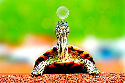 Animal, Turtle, Bubble, Cute, Macro