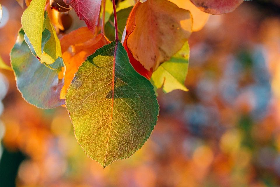 Autumn Close Up Fall Free Photo On Pixabay