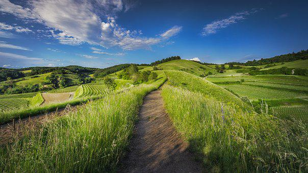 Countryside, Grass, Grassland, Hill