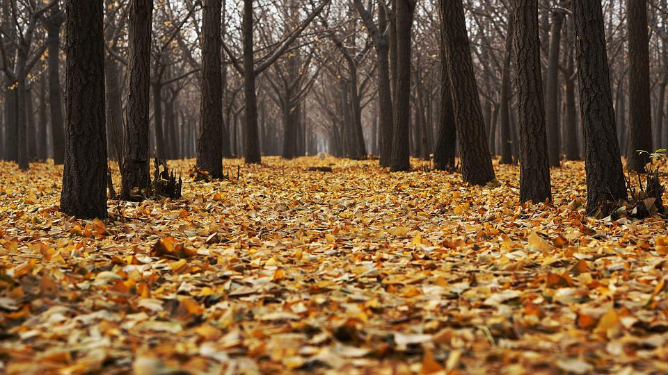 Free photo: Autumn, Dry Leaves, Fall, Forest - Free Image ...
