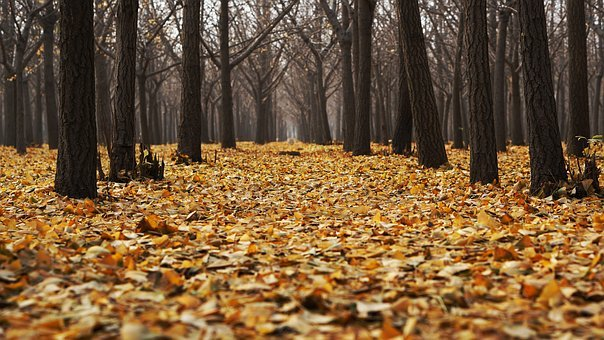 Autumn, Dry Leaves, Fall, Forest