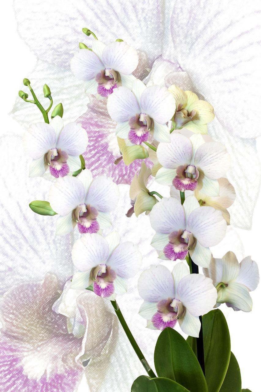 открытка с белыми орхидеями всём мире