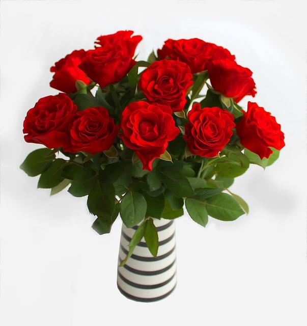 Rose Flower Love: Free Illustration: Roses, Red, Flowers, Love, Flower