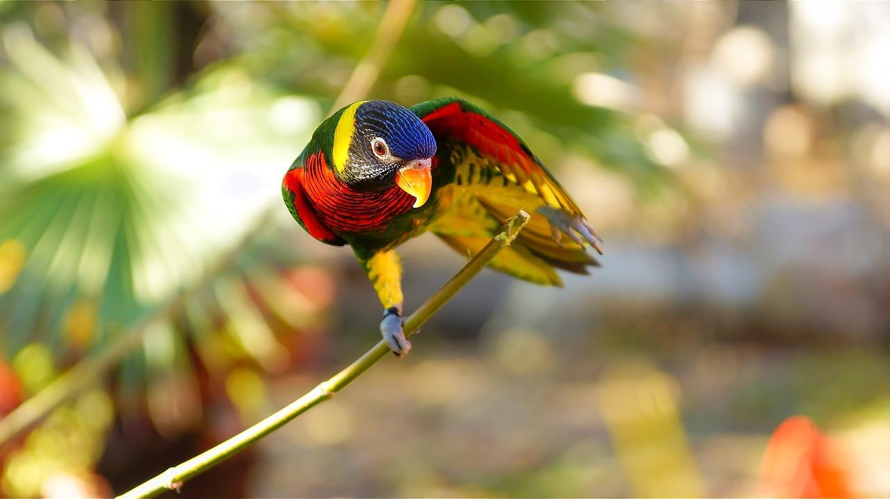 information about parrot bird