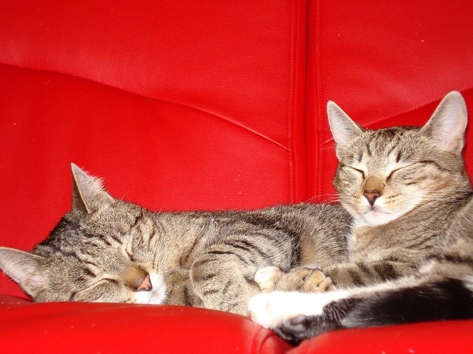 7b33c7df3162 Γάτες Κατοικίδια Ζώα Γατάκια - Δωρεάν φωτογραφία στο Pixabay