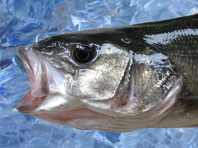 чем заражена рыба в выборгском заливе получить