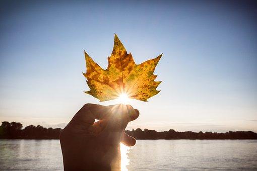 Autumn, Leaf, Sun, Backlighting