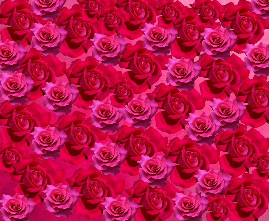 картинки много роз красных героев нет отрицательных