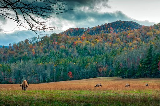 North Carolina, Meadow, Deer, Elk