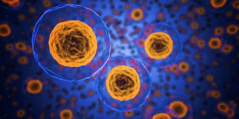 Cellules, Humaine, Médicaux, La Biologie, La Santé