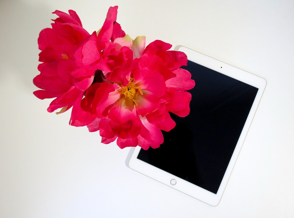 free photo flower, pink, tablet, pink flowers  free image on, Beautiful flower