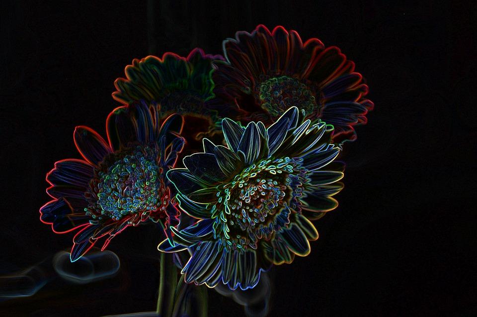 Bunga Cahaya Neon Warna Gambar Gratis Di Pixabay
