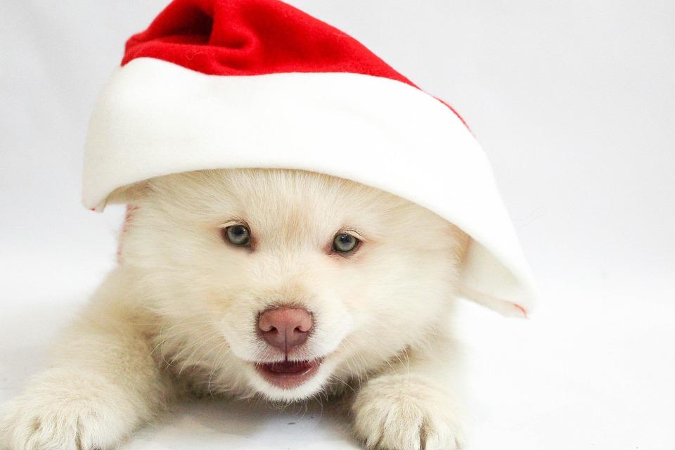 christmas puppy dog free photo on pixabay