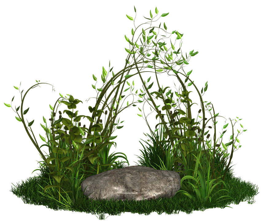 Green plants png images galleries for Green plants for garden
