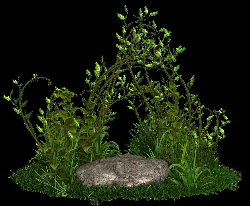 Pflanze Pflanzen Grün Kostenloses Bild Auf Pixabay