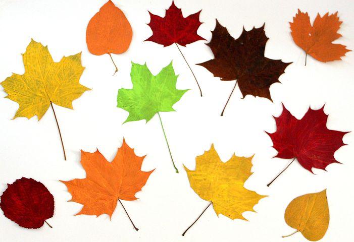 сторона картинки осенних листиков деревьев этом агентству рассказал