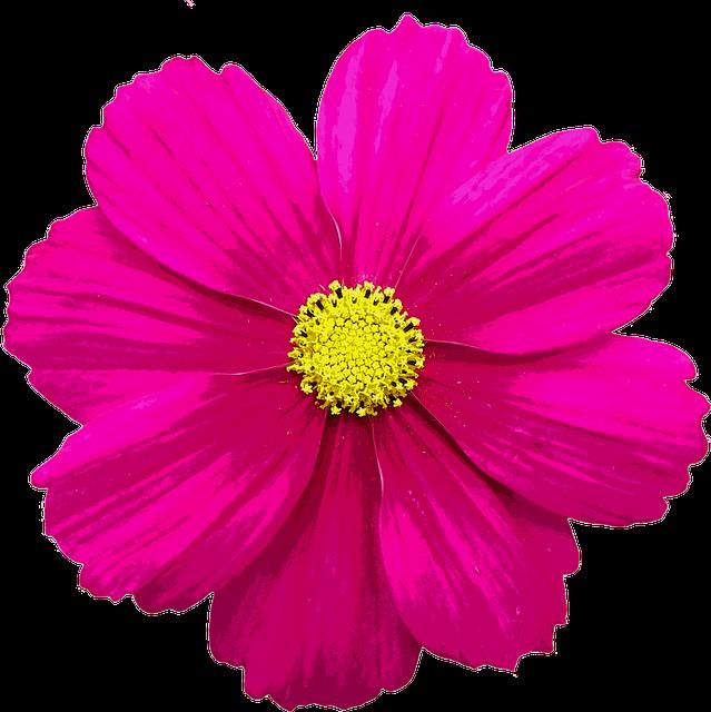 Blossom Bloom Flower · Free image on Pixabay