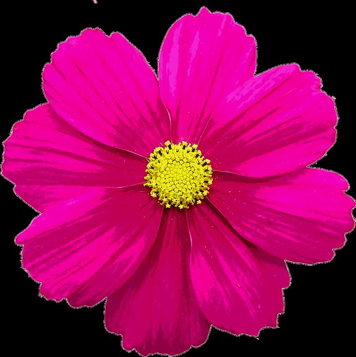Flor color flores de verano imagen gratis en pixabay - Flores de verano ...